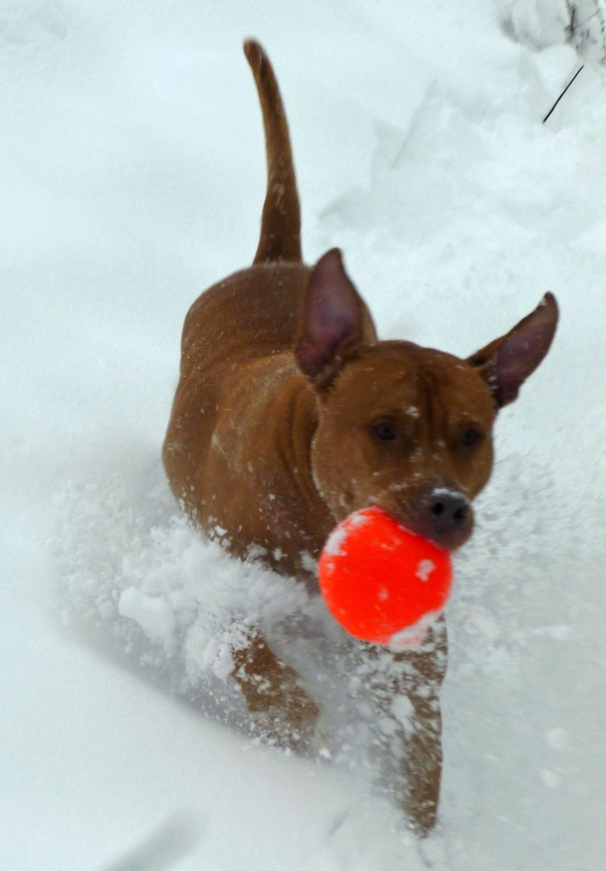 Blaze, from Florida, loving the snow. Submitted by: Allison Keat