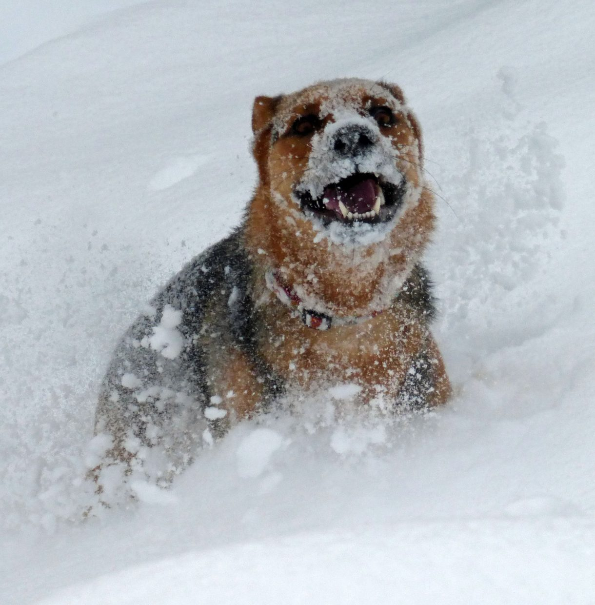 You're addicted to the fresh powder if you look like this while enjoying it! Submitted by: Allison Keating