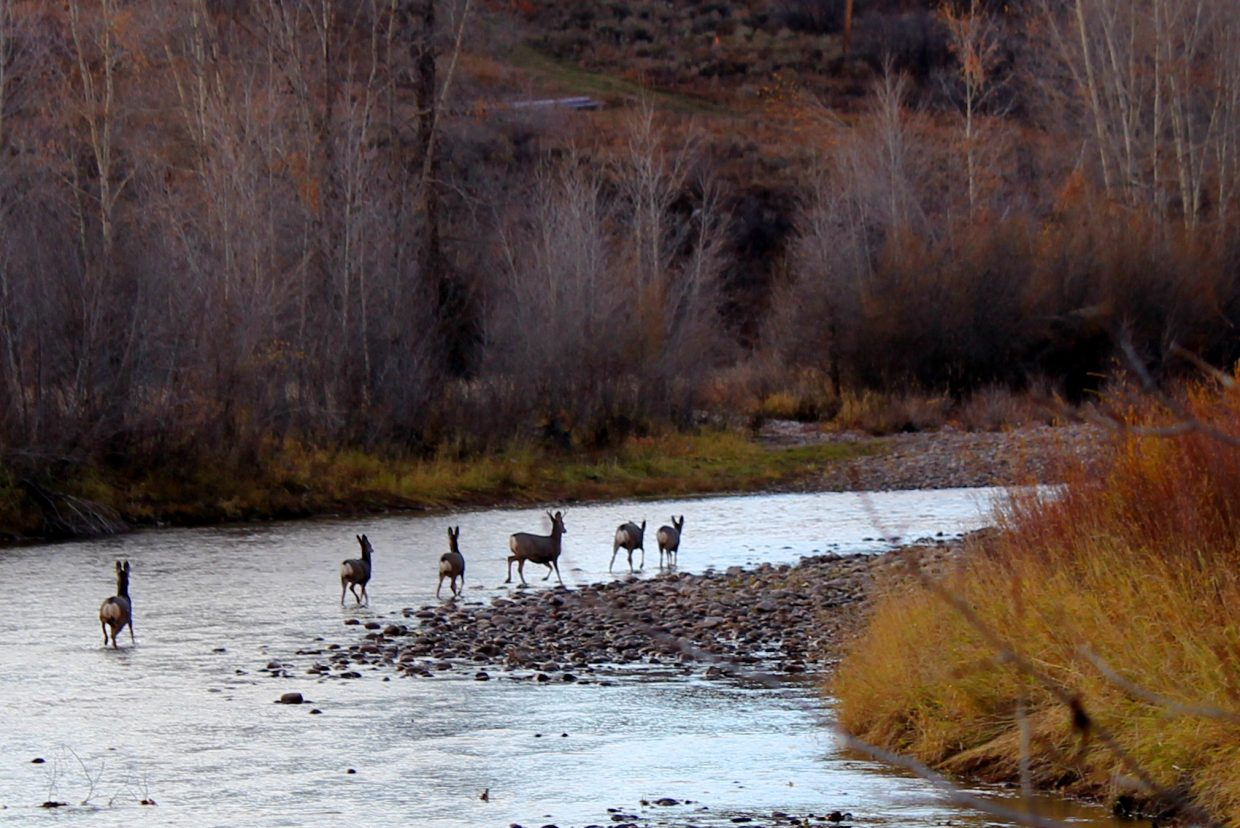 Deer in the Elk River. Submitted by: Diane Miller