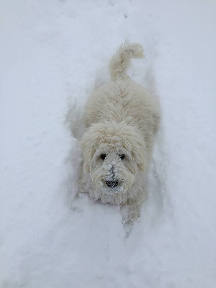 Our puppy Ellie enjoying her first snow year! Photo submitted by: Marcia Cobb.