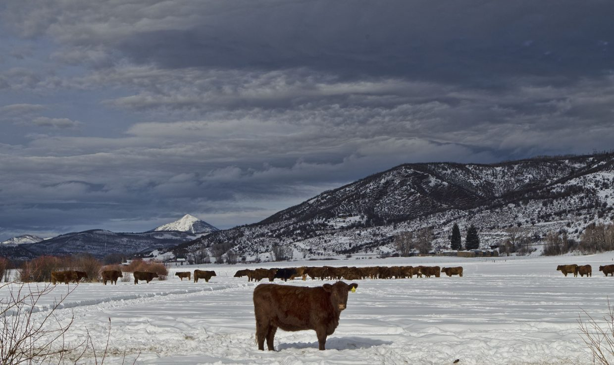 Taken off Routt County Road 129. Submitted by: Cyndi Marlowe