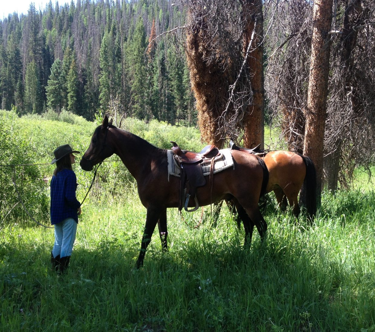 I took my youngest on a ride up the South Fork of the Elk this week, her first trail ride. She did quite well, and got the chance to lead as we crossed the river several times. Here is a photo that shows them sharing a moment when we stopped for a break. I like the colors, and the focus both Dudabug and Grace seem to reflect, but then, I'm partial. Submitted by: Silas Axtell