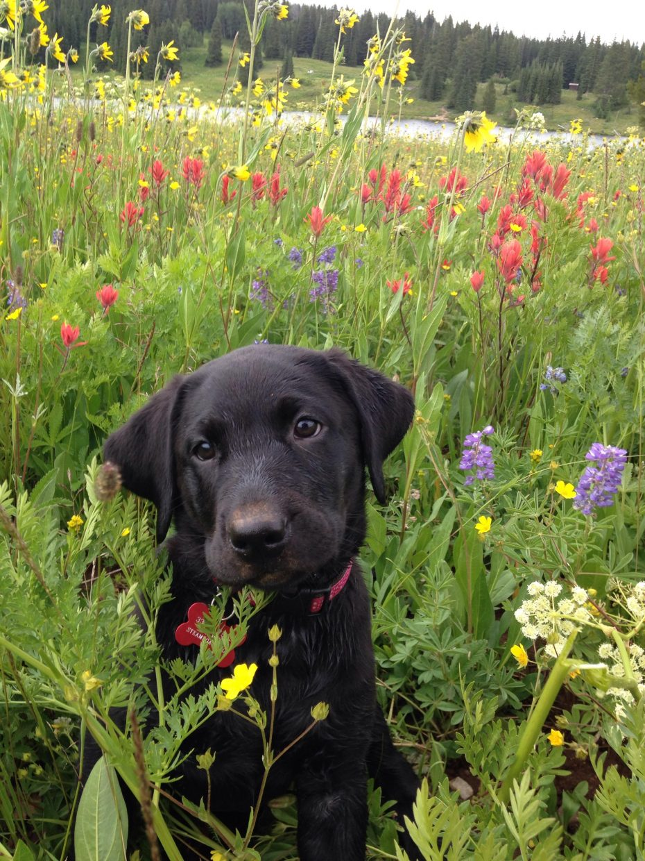 Yampa River Dory's first hike at Dumont Lake -spectacular wildflower display Submitted by Phyllis Cron.