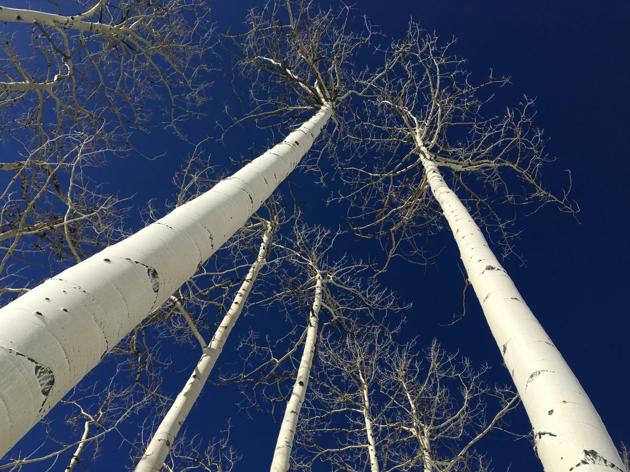 Blue skies and aspens. Steamboat Ski Area. Submitted by Jeff Hall.