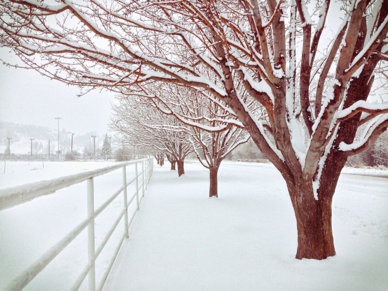 Winter Wonderland. Submitted by Jeff Hall.