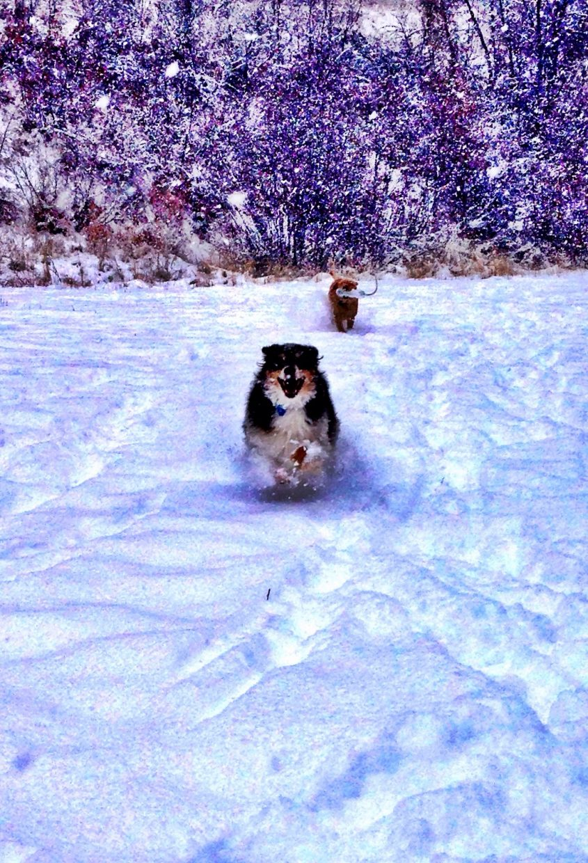 Dogs getting some fresh lines on Spring Creek. Submitted by: Chad Harkins.