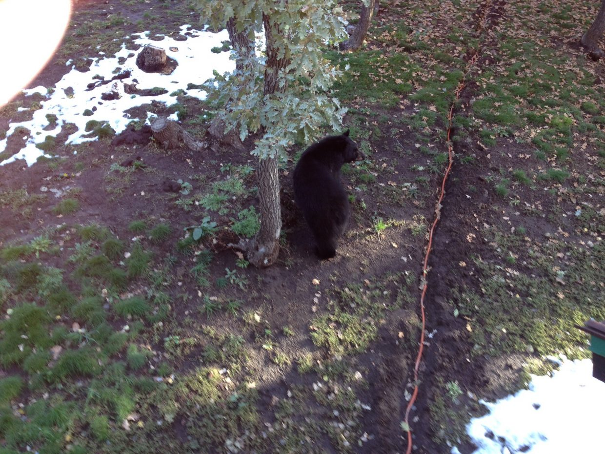 Whitewood bear. Submitted by: Laurie Tucker