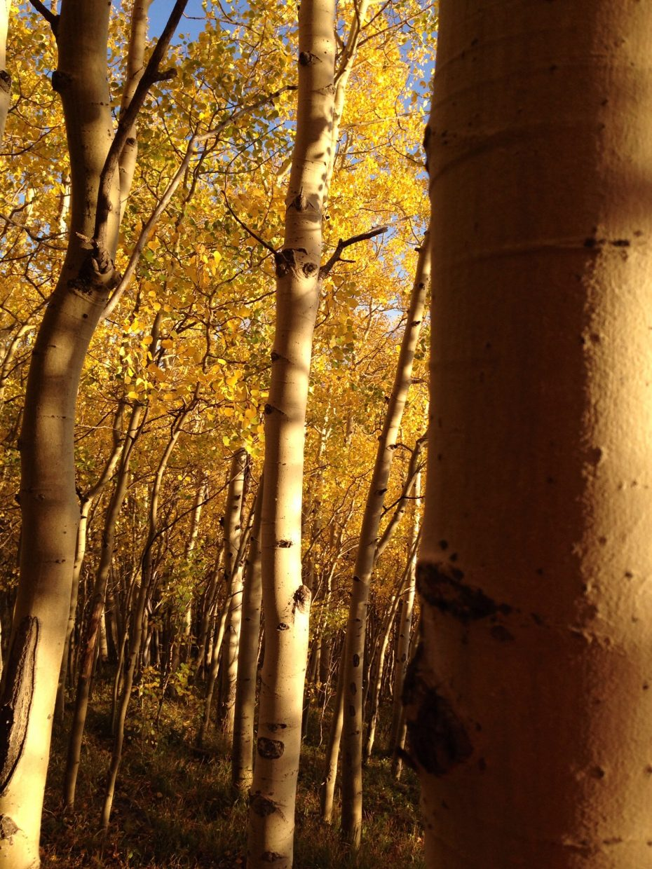 Flat Tops Wilderness Area. Submitted by: Mary Davies