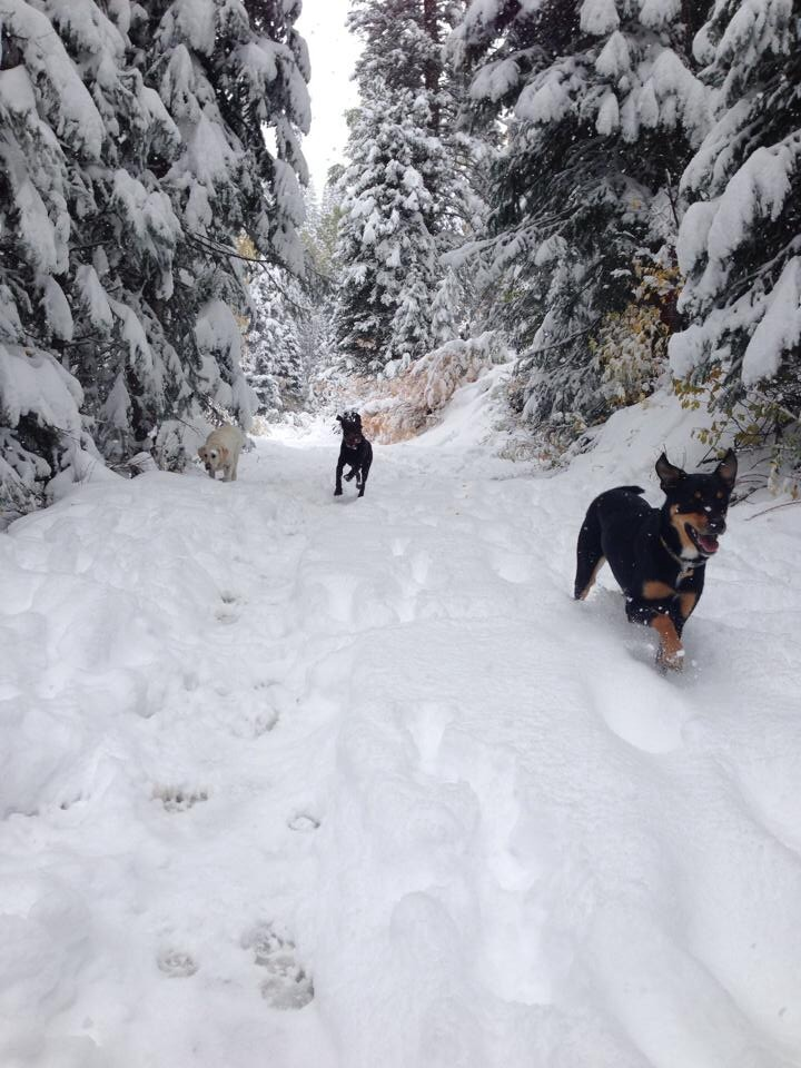 First snow shoe of the season with the dogs. Spring Creek was beautiful! Submitted by: Jessica Scroble