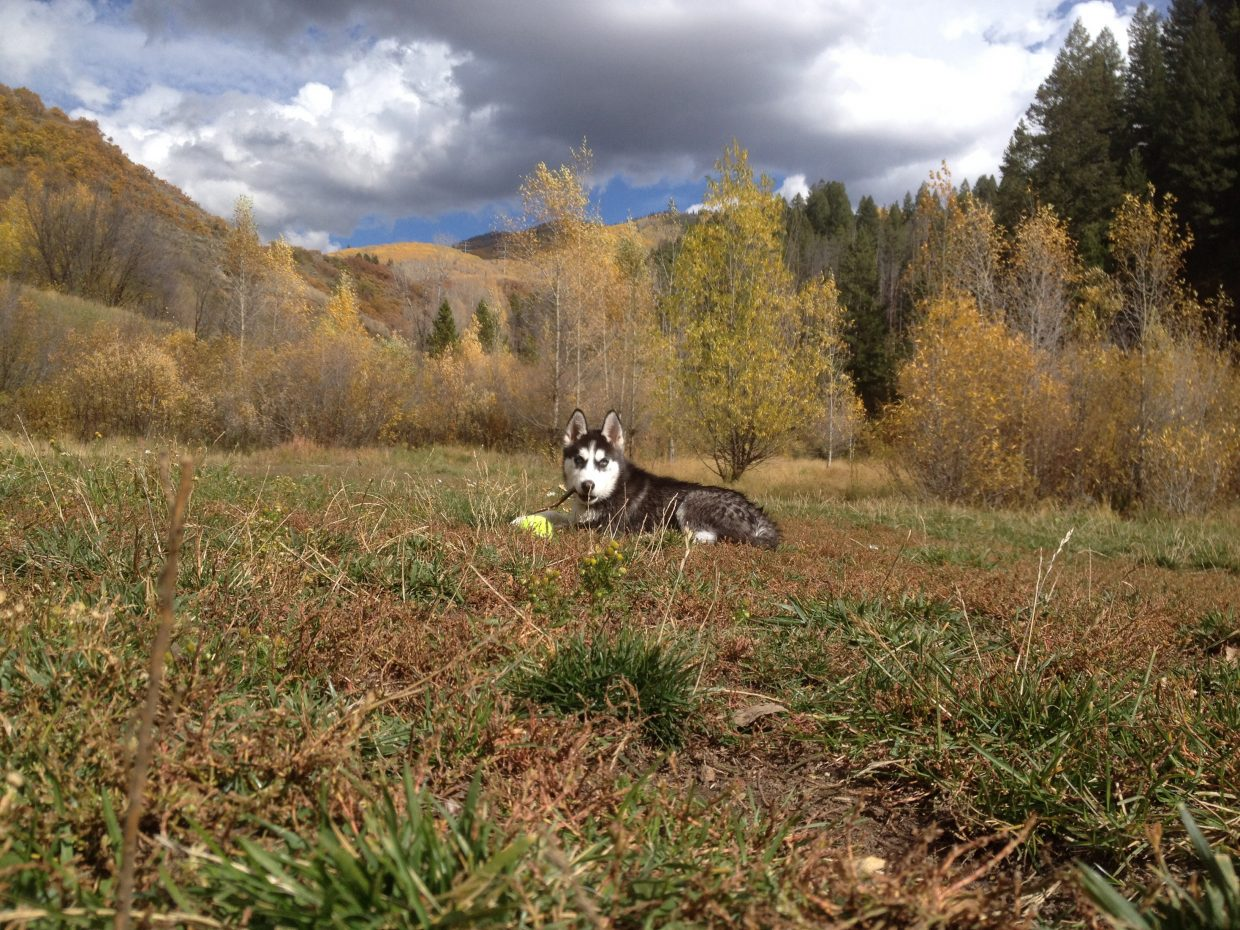 3 month old Loki at Spring Creek. Submitted by: Jeff Sundwall