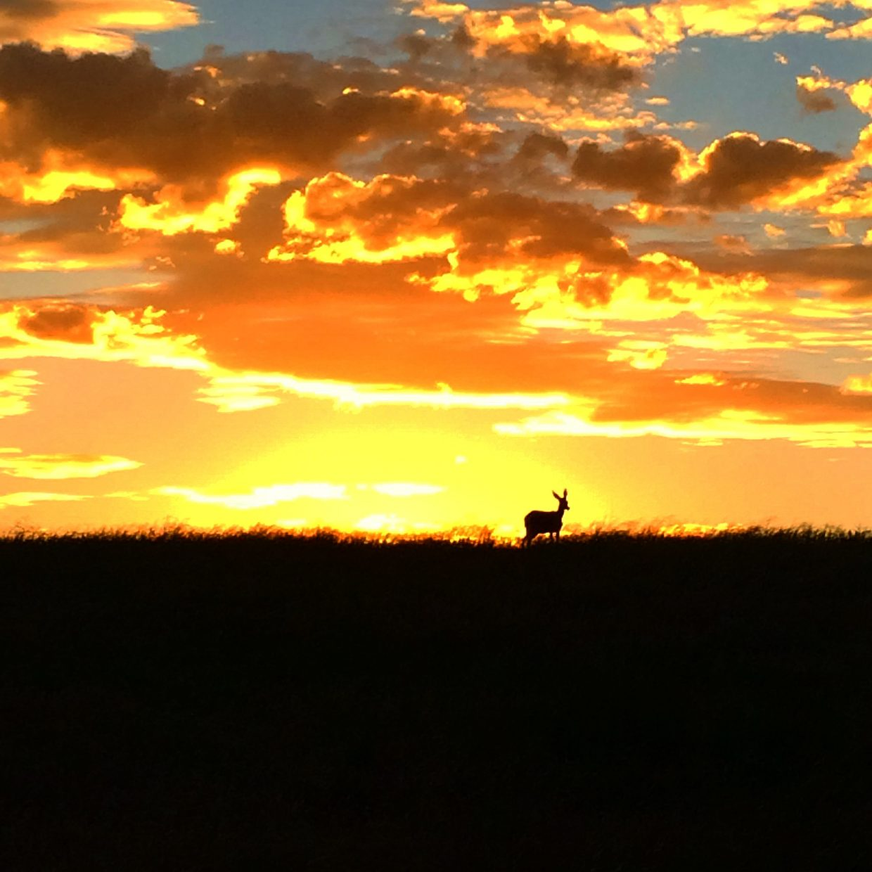Sunset and a deer. Submitted by: Michelle Madderom