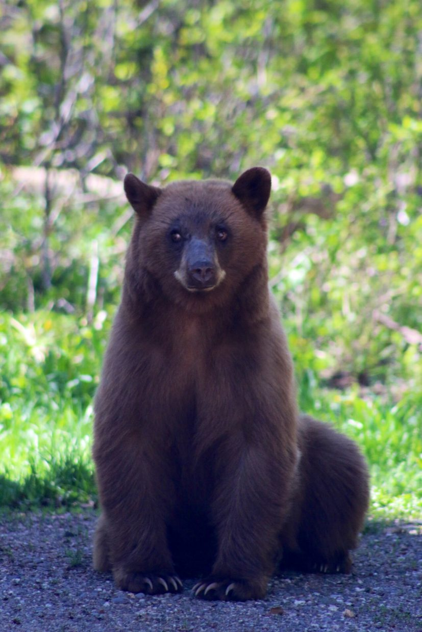Bear visitor. Submitted by: Josh Cook