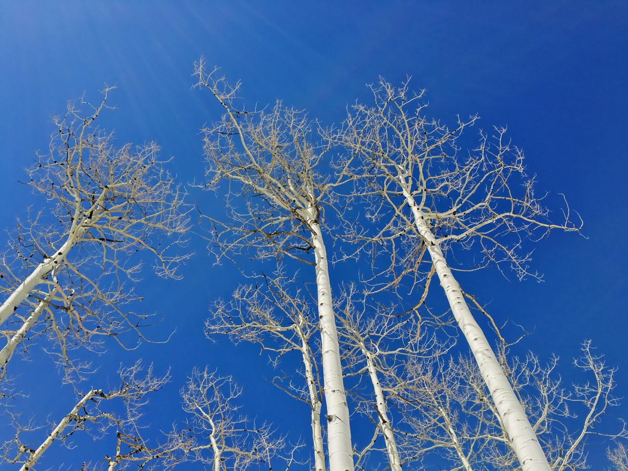 Blue skies of Steamboat. Submitted by Jeff Hall.