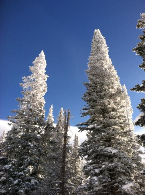 A spectacular day on Mount Werner. Submitted by: Curt Merchant