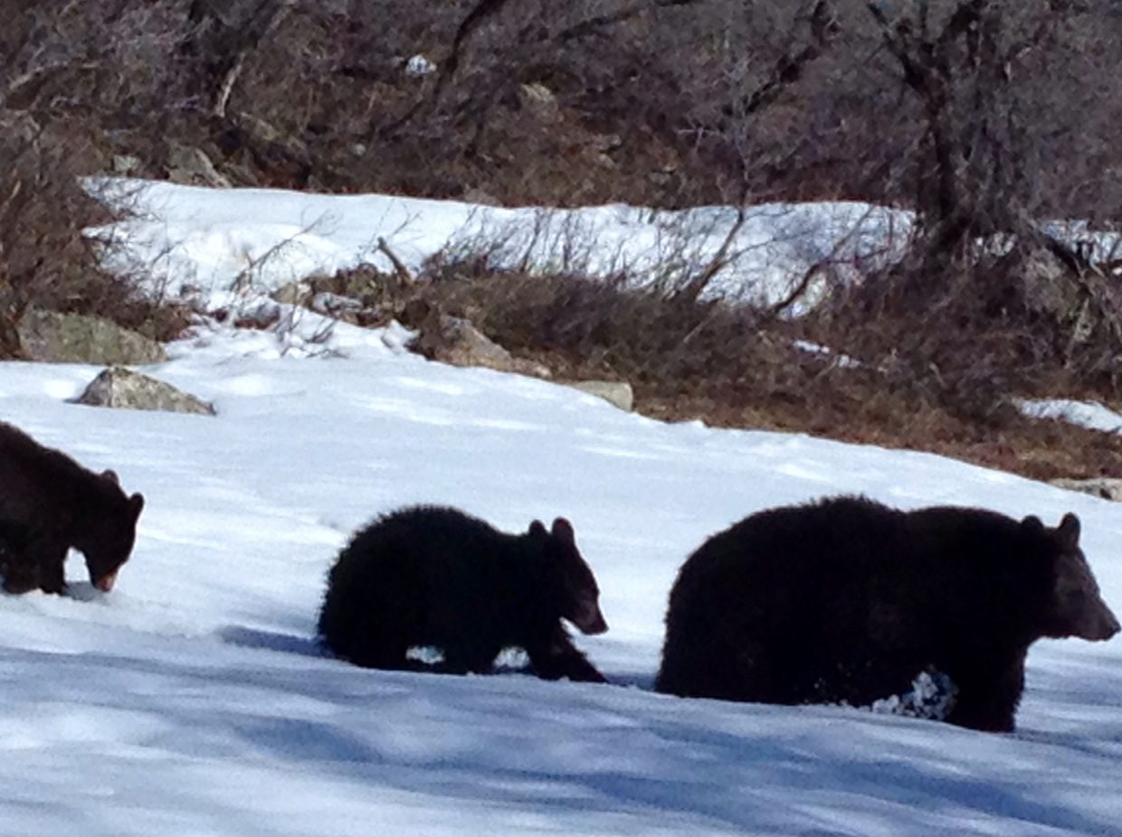 The bears are out of hibernation. Submitted by Nancy Hausman.