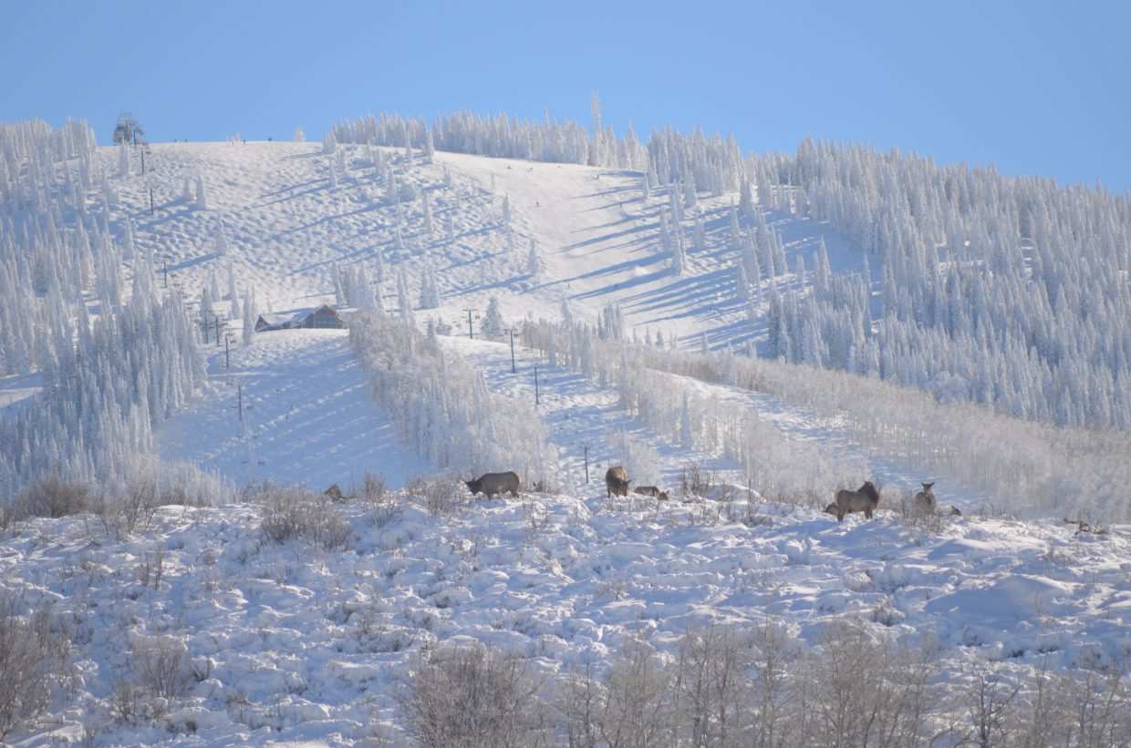 Elk on ridge. Photo submitted by: Laurie Dobell.