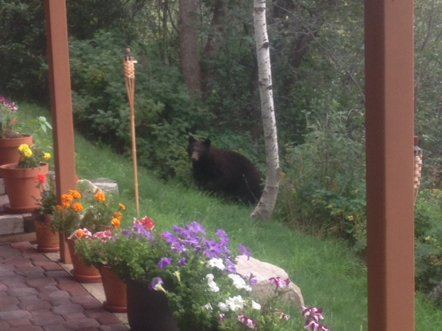 This little visitor came by our home last week. Submitted by Ken Schomaker
