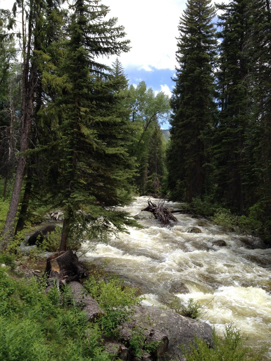 Fish Creek. Submitted by: Karen Lindeman