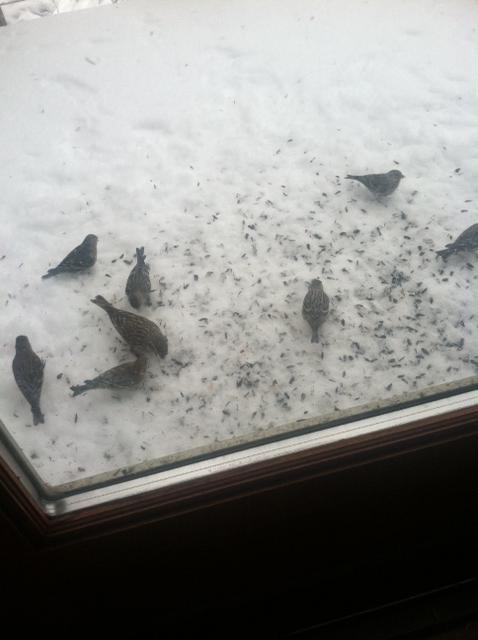 The birds on my porch know it is spring. Submitted by Jane Romberg.