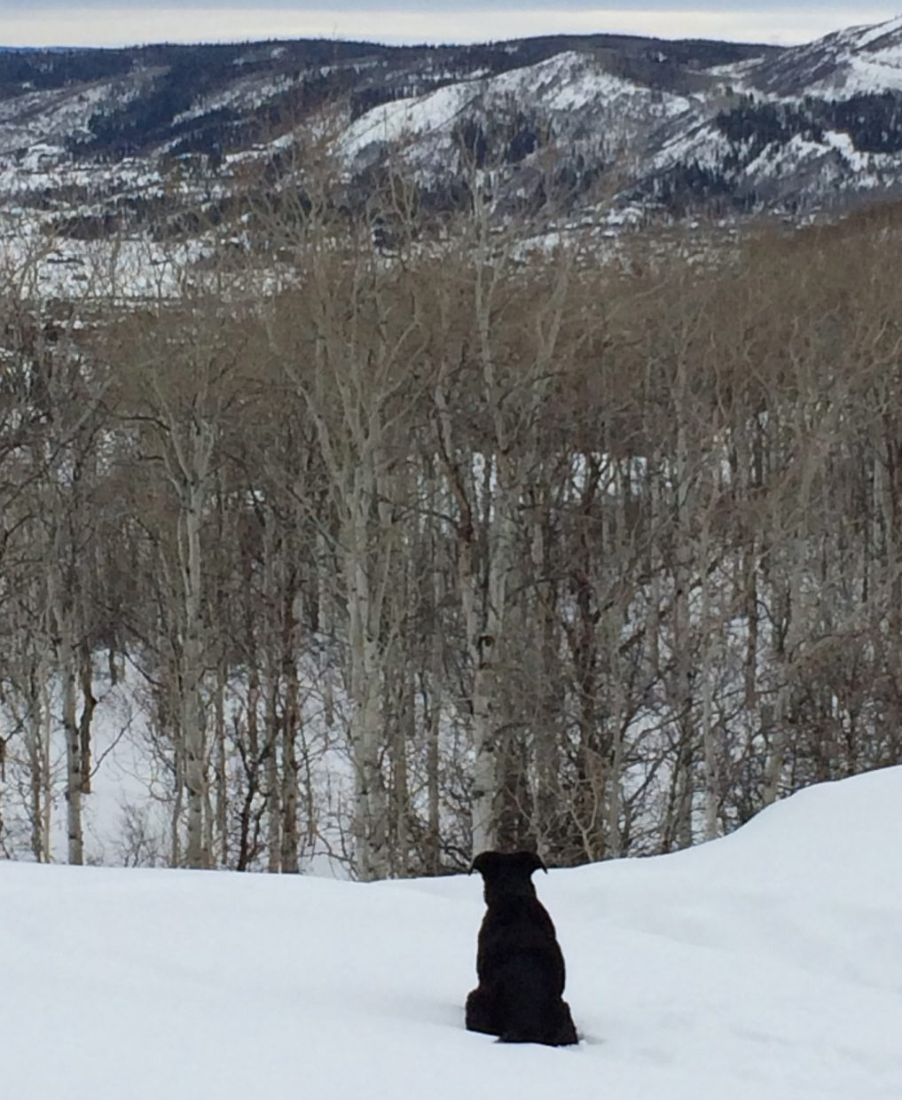 Buddy, enjoying the views from skyline trail. Submitted by Jane Williams.
