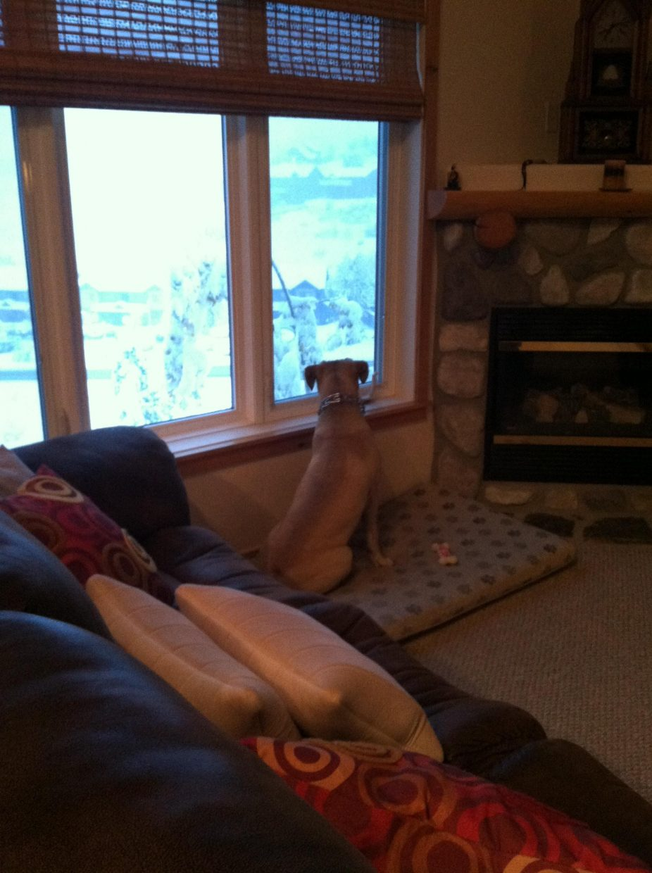 Jake is scared of the snow laden tree lurking outside the window. Submitted by: Julie Montes