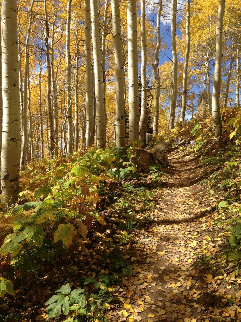 Sunshine Trail at Steamboat Resort. Submitted by: Terri Goforth