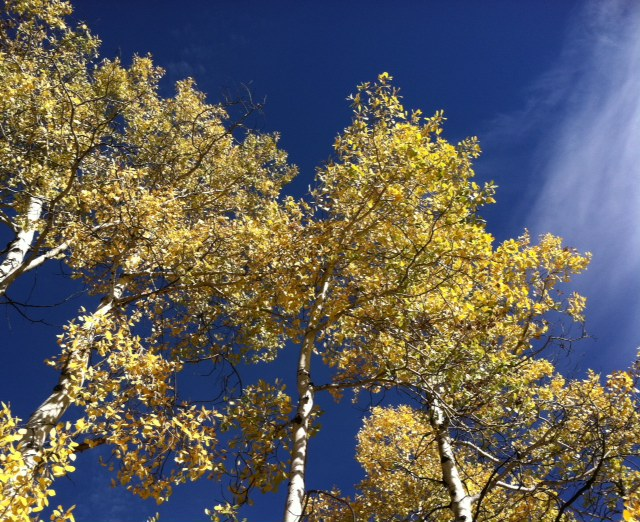 The fall colors are still splendid on the Spring Creek Trail! Submitted by: Allison Tate
