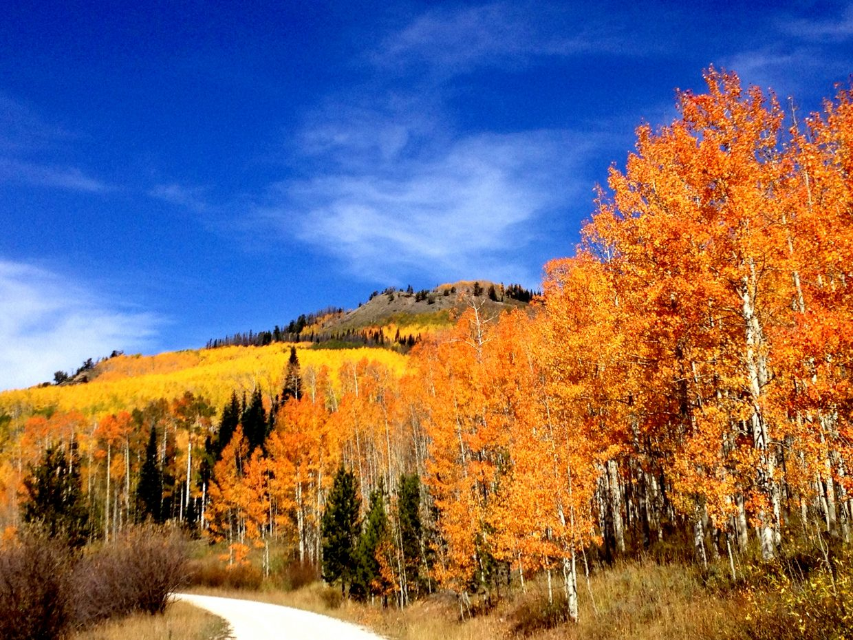 Fall colors. Submitted by: Tori Quinn