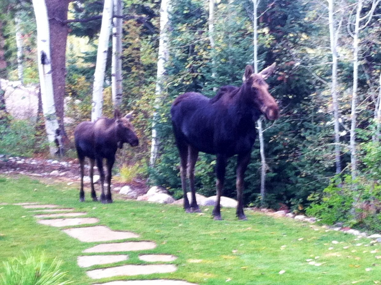 Moose! Submitted by: Doran Walton
