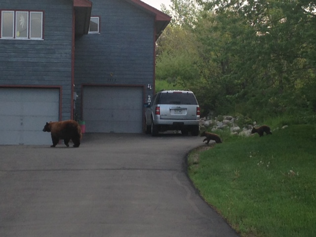 A big mama and two small cubs on Blue Sage Drive on Sunday morning. Submitted by: Kathryn Fresques