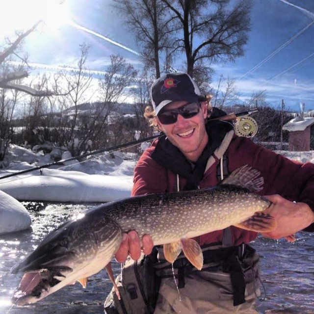 Local Andy Janoski caught this trophy Pike last week in downtown Steamboat Springs! Submitted by: Lauren Davison