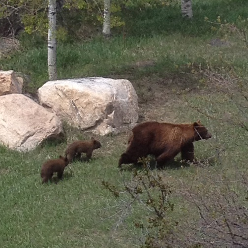 I had special guest visiting for lunch on Sunday — behind my house on Fish Creek Falls Road. Submitted by: Lori St. Pierre