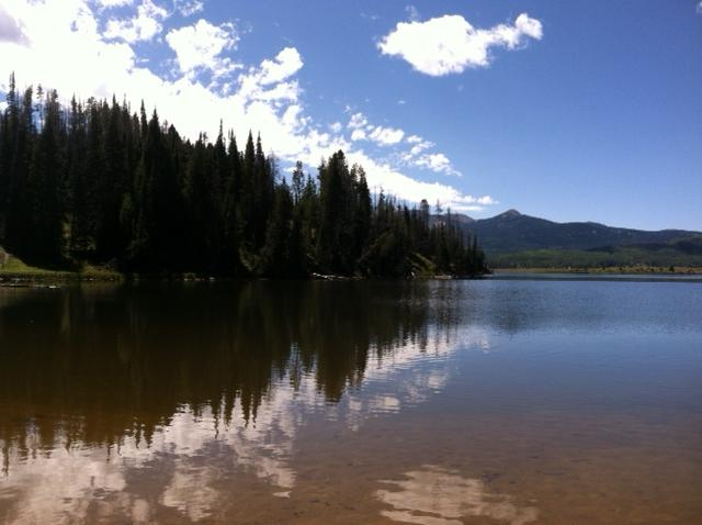 Steamboat Lake shoreline. Submitted by: Curt Merchant