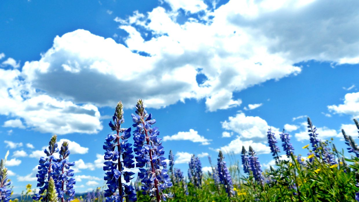 The picture of the purple flowers was taken at Steamboat Lake. The pink flower is from Hans Peak Lake. The water picture is from Stagecoach Reservoir. Submitted by Lindsey Fischer.