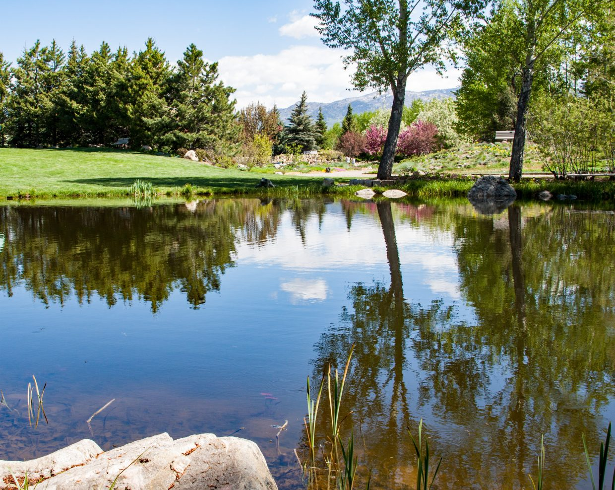 Reflections (Yampa River Botanic Park). Submitted by G Fredric Reynolds.