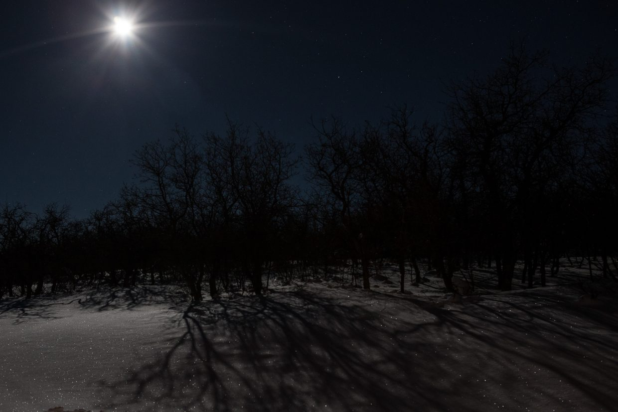 Shadows in the moonlight. Submitted by Carolyn Culp.