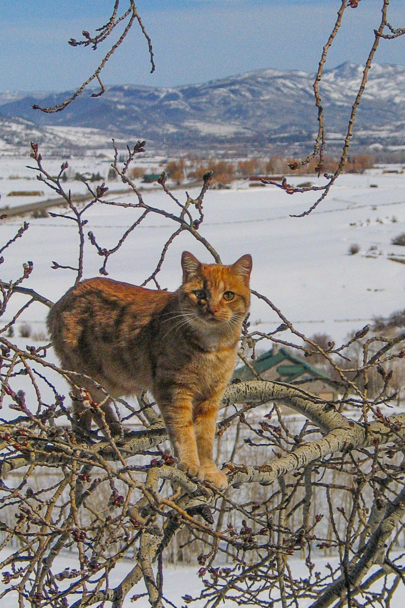 """Aspen cat."" Submitted by Sharon Bigelow."