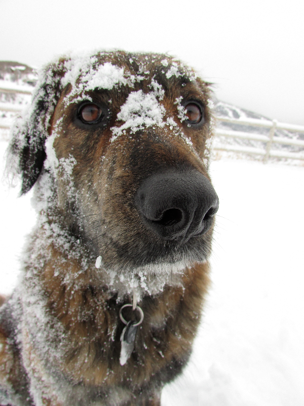 Suzy the snow dog. Submitted by: Amanda Poole