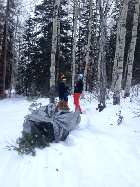 Jane Kurtz Williams and Cory Swanson's Christmas tree on Buff Pass. Submitted by: Catherine Kurtz