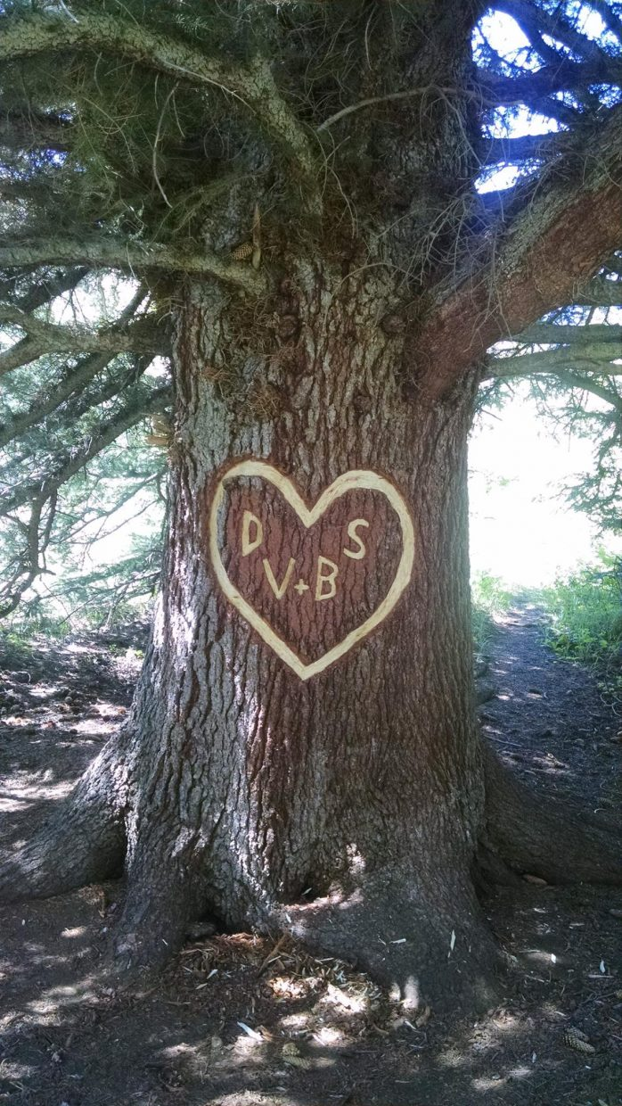Some local cycling and running groups are hoping to find the people who carved initials and a heart into an old tree on the Hot Springs Trail.