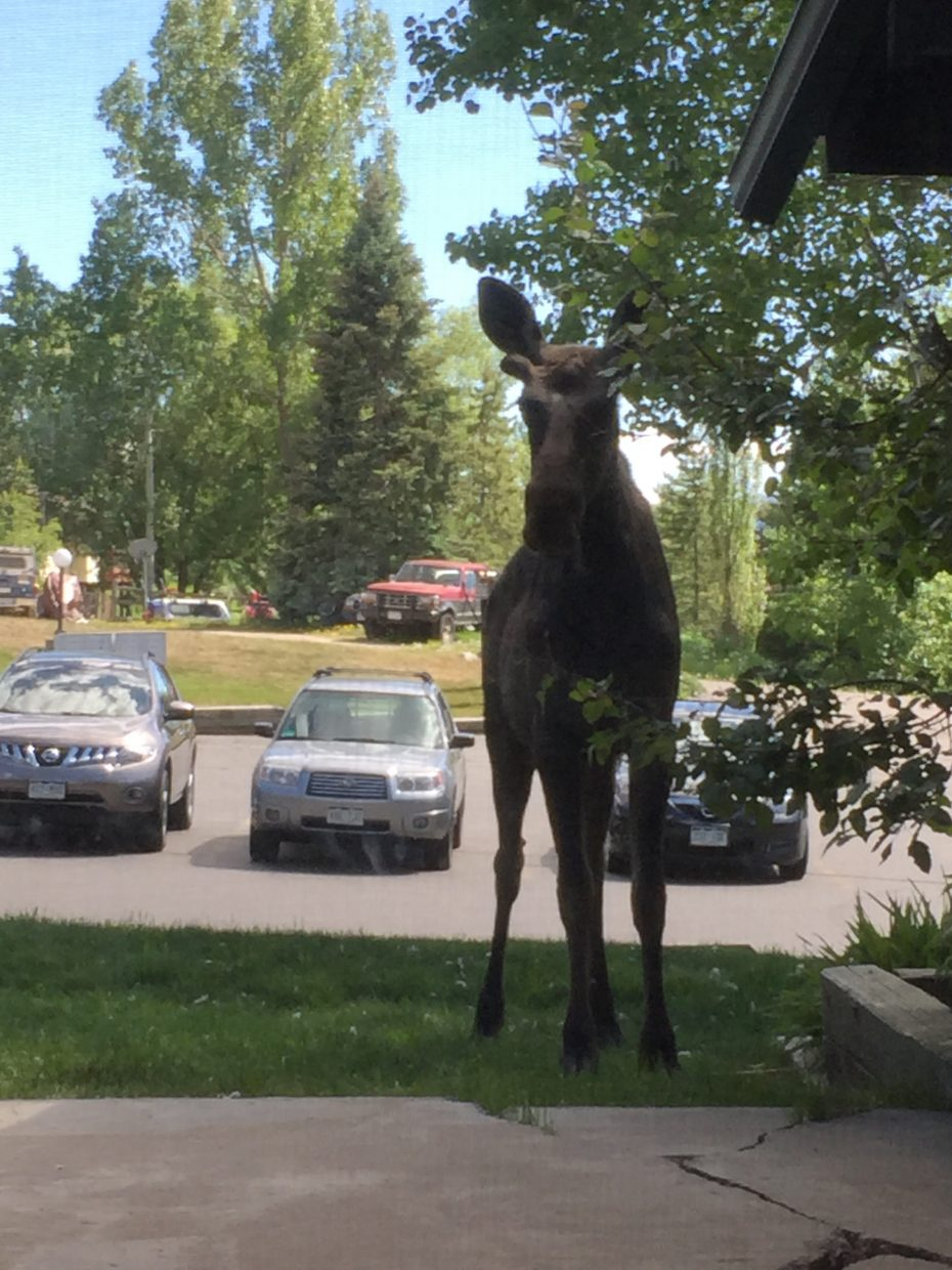 We had a visitor drop by today for a snack from our planter box. Submitted by Wallie Morris.