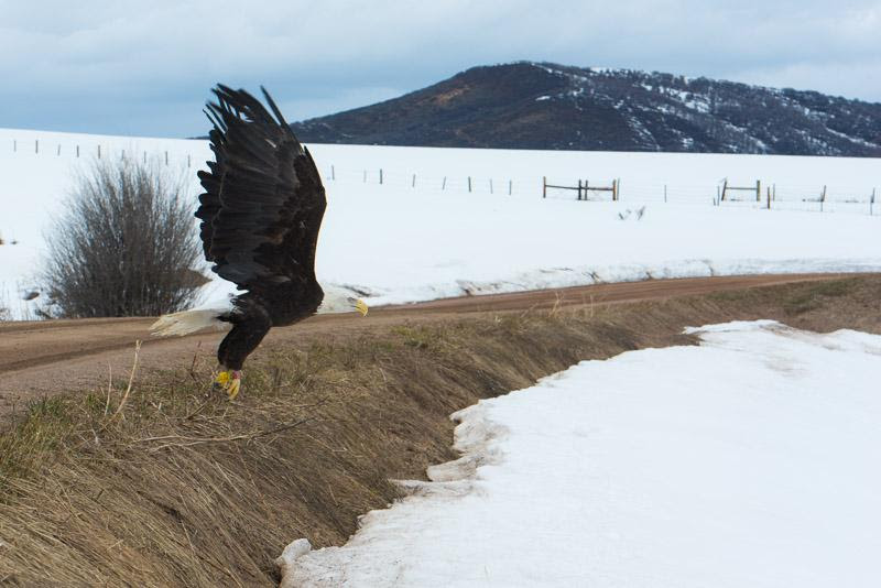 This bald eagle was released after 13 months in rehab for lead poisoning. He was released in honor of Mike Fozdick, Eian Stamp and many others who have passed this year. Eagles are known to be messengers to the heavens. Submitted by Tracy Bye.