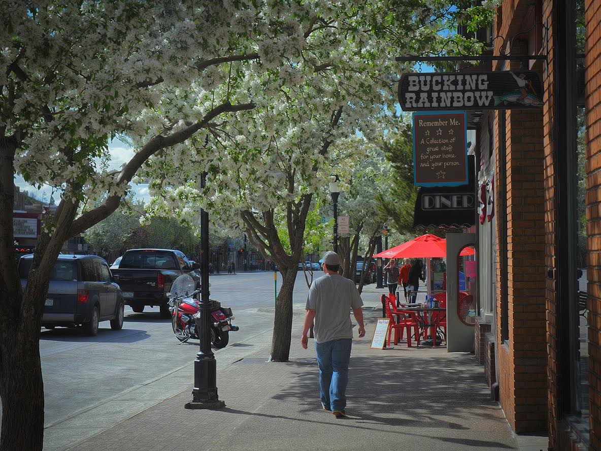 Spring blossoms, Lincoln Ave. Submitted by Jeff Hall.