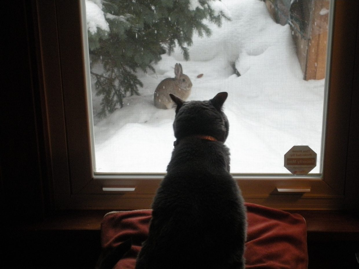 Toppy watching her buddy we fed