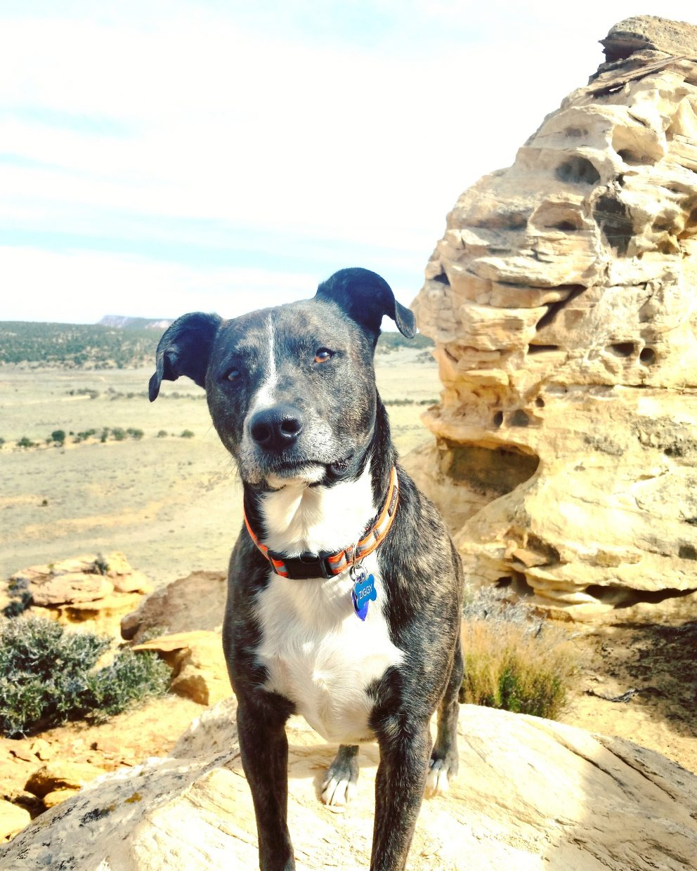 """Ziggy in the desert."" Submitted by Mary Lourenco."