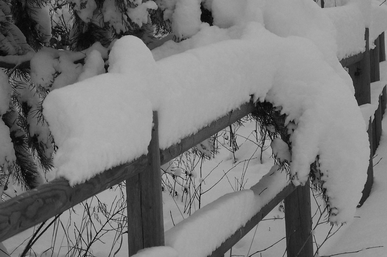 """Snow lizard crawling down fence post."" Submitted by: Sandy Martin."