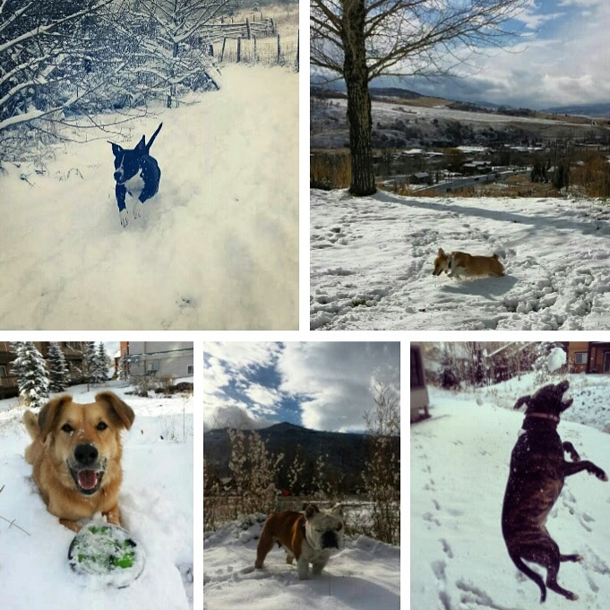 Dogs of Steamboat. Submitted by: Mary Lourenco.
