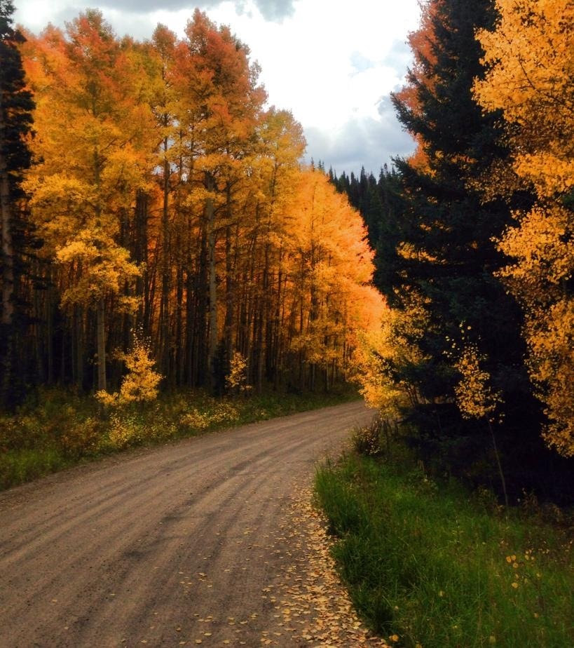 Fall colors on Dunkley Pass. Submitted by Mary Davies.