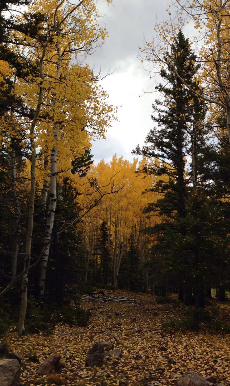 Fall in the Rio Grande Mountains. Submitted by Mary Davies.