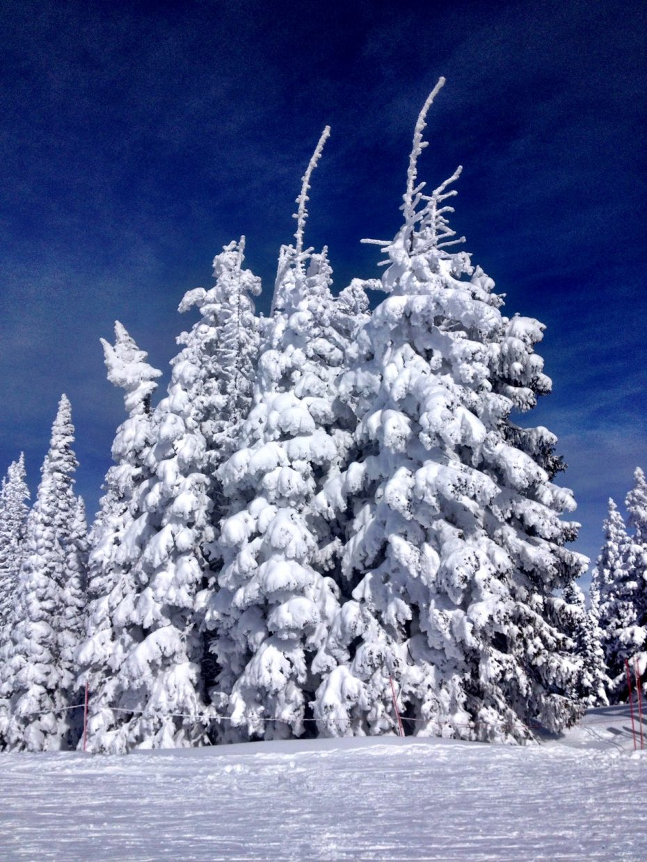 Snow giants on Mount Werner. Submitted by: Verleen Tucker